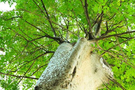 Tree of Spiderman Stock Photo - 17081831