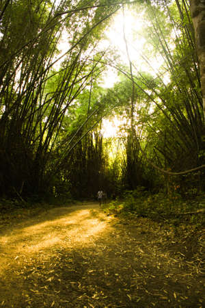 Bamboo Forest With sunset II