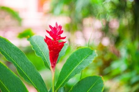 Red Flowers III Stock Photo - 19144565