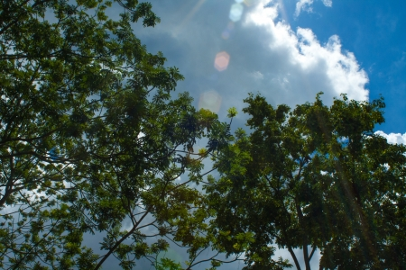 Forest canopy III