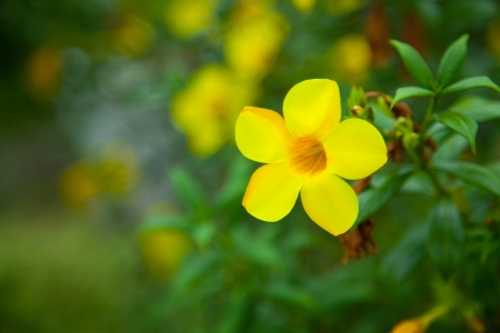 Yellow flowers VI