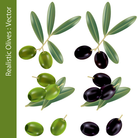 Realistic Olives. Illustration   Stock Vector - 7556228