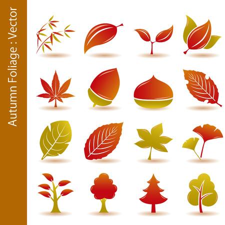 leaf vein: Autumn Foliage Leaf Icons Set Illustration