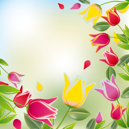 tulips isolated on white background: Tulip colorful background