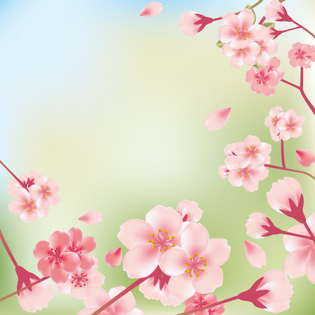 summer in japan: Cherry blossoms background. Illustration