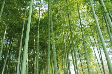 healing plant: Bamboo Grove