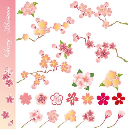 ramo di ciliegio: Set di icone di fiori di ciliegio. Illustrazione vettoriale. Vettoriali