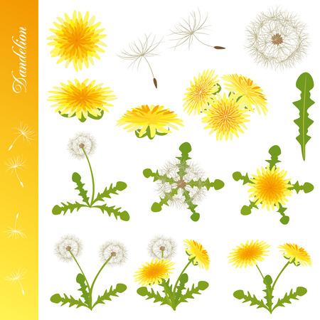 dandelion field: Dandelion Icons Set. Illustration vector.