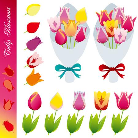 nosegay: Tulip blossom icons set. Illustration vector.