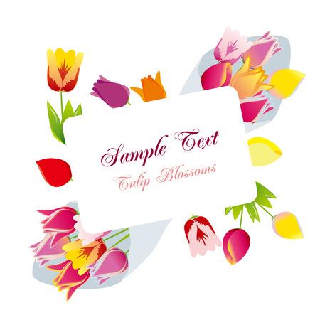 Tulip blossoms frame. Stock Vector - 9055765
