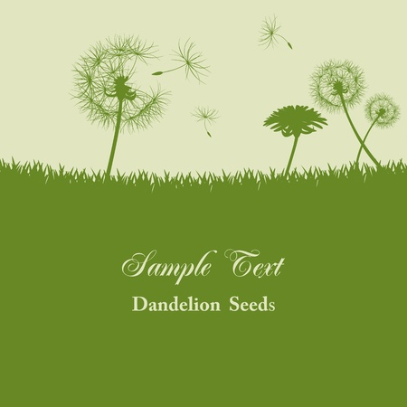 Dandelion seeds background. Illustration Vector