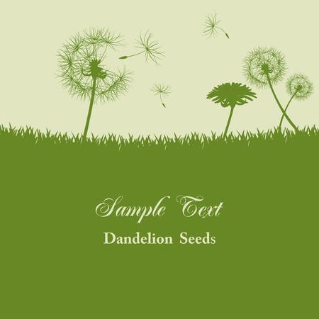 sementi: Sullo sfondo di tarassaco semi. Illustrazione