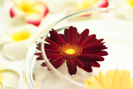 Floating gerbera photo