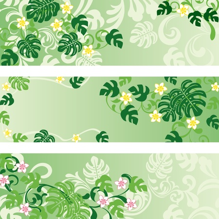 aloha: Monstera banners set.  Illustration
