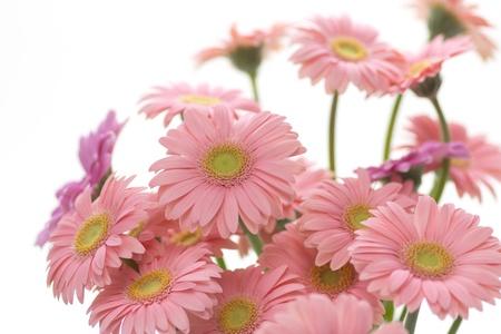 Pink gerbera. Flower arrangement photo