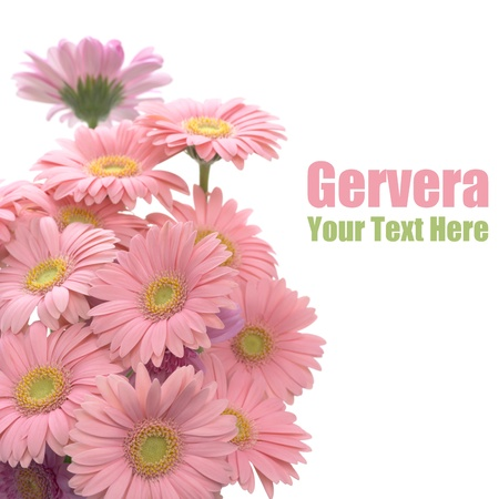 Pink gerbera. Flower arrangement photo
