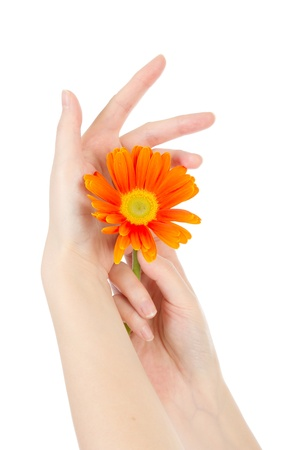 Beauty hands and flower Stock Photo - 12296657