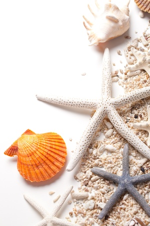 Seashells and starfish over white  Vacation concept   photo