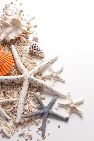 Seashells and starfish over white  Vacation concept   Stock Photo