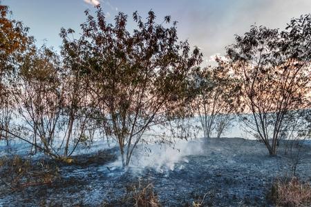 charred: Charred trees