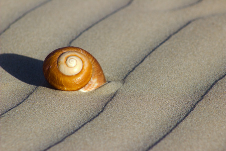 sea shell on a sea sand