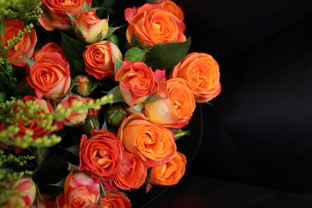 Close up view of roses on dark background