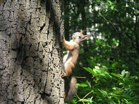 winepress: The squirrel on a tree