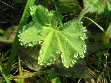 Drops of a rain Stock Photo