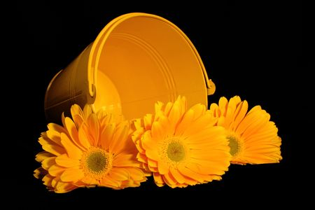 Three yellow gerber daisies in a pail. Stock Photo - 363448