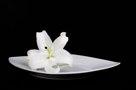 Picture of a pure white lily on a plate in front of a black background Stock Photo - 823011