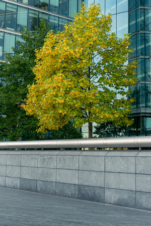 glass fence: Trees with green-yellow leaves,surrounded by a glass office building and concrete fence