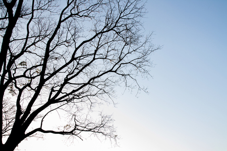 tree silhouettes: silhouettes of tree branches