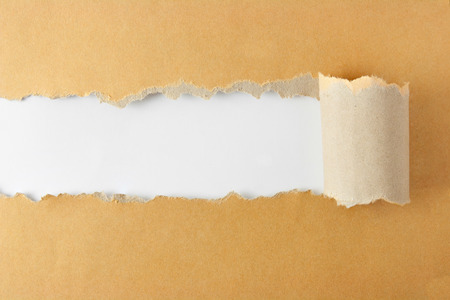 curled edges: Brown package paper torn to reveal white panel ideal for copy space
