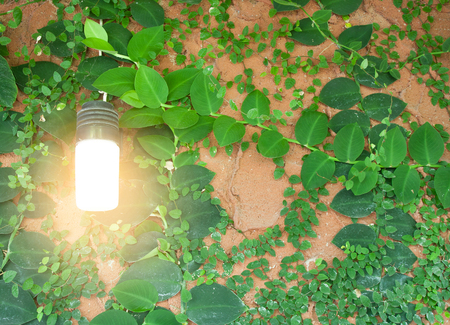 Inspiration environment concept light bulb metaphor for good idea and environmental conservation.