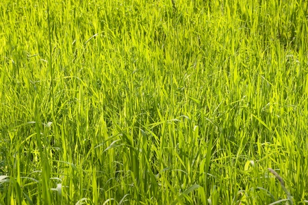 hellgrün sonnigen Gras Lizenzfreie Bilder