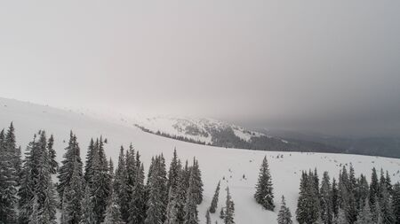 Aerial view of beautiful thick spruce trees growing on the hills and ski slopes on a cloudy frosty winter day. The beauty of the northern country and harsh nature concept. Copyspace