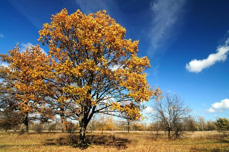 Bewitching autumn landscape in a country park with yellowed leaves on trees and dried grass on a sunny warm autumn day. Autumn vacation concept