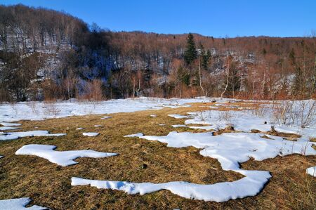 Forest glade surrounded by coniferous forest on a sunny spring day. Melting snow, clear blue sky