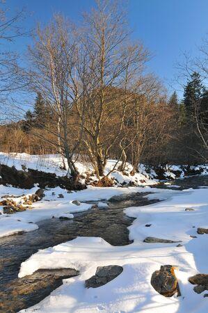 A small mountain stream flows in a snowy coniferous forest. Winter landscape Standard-Bild