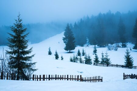 Beautiful panorama of fences peeping out from under high snowdrifts against a background of tall snowy fir trees in fog. The concept of suburban northern European nature