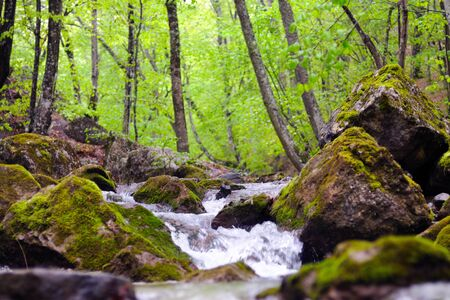 Stones covered with moss and lie in water, mountain stream with rapids, fog covers water, fallen leaves on shore 版權商用圖片