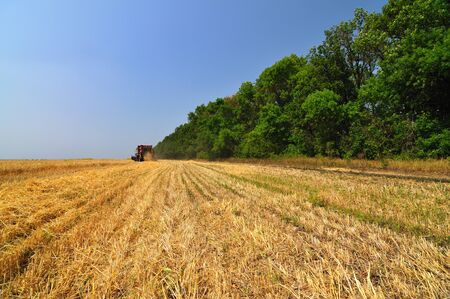 Red combine harvester working in wheat field on sunny summer clear day. Agricultural natural background and wallpaper 스톡 콘텐츠
