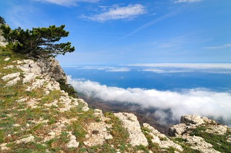 Beautiful landscape, tree grows on top of rocky mountain, forest valley and blue sky with white clouds Banco de Imagens