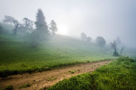 Mesmerizing mystical landscape of a road and forest growing on a mountain slope covered in thick fog on a warm summer morning. Concept Travel and Mysterious Nature Banco de Imagens