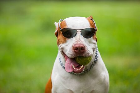 Adorable funny dog wearing sunglasses.
