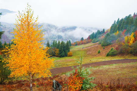 View of majestic mountain forest. Gorgeous foggy hill with colorful coniferous trees. Concept of nature. Standard-Bild