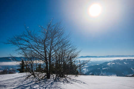 Beautiful slender fir trees grow among snow-covered snowdrifts on a hillside against a background of blue sky and bright moon on a frosty winter night. Concept of resting outside the city in winter Stock Photo