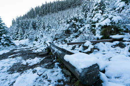 A small fast spring with clean cool transparent water among heavy snow and dark forest in the picturesque Carpathian mountains
