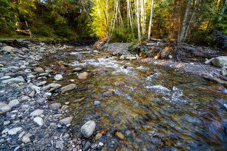 A small fast clear stream in a sunny Carpathian gray forest among a large number of small pebbles