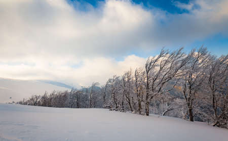 Fluffy clouds shelter under white snow sheltered by forests and beautiful mountains